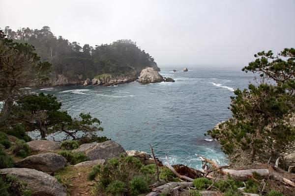 Point Lobos-4 222