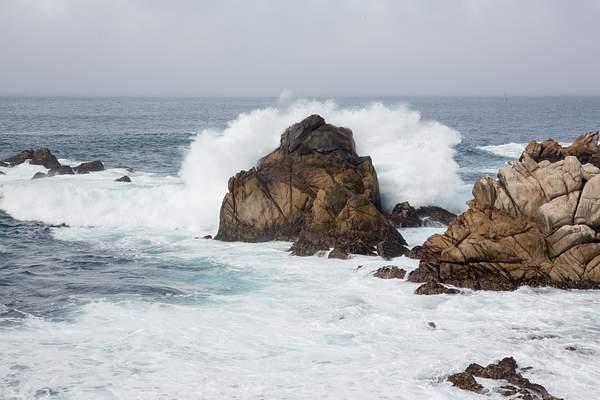 Point Lobos-3 222
