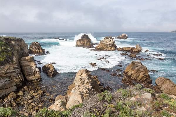 Point Lobos-2 222