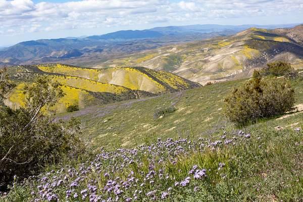 Carrizo Plain-15 222