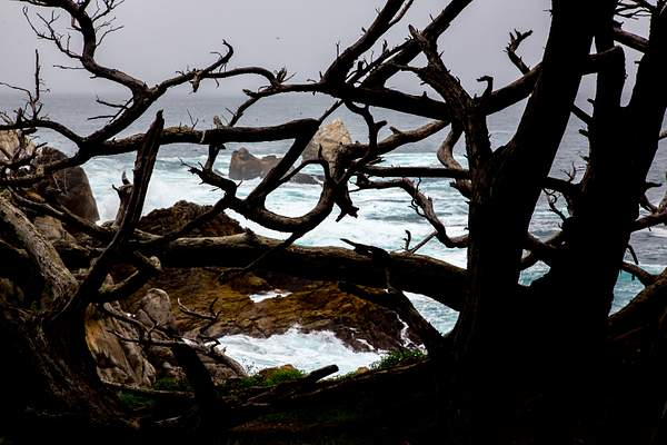 Point Lobos-11.jpg