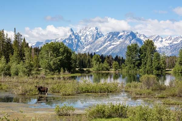 Moose Hollar