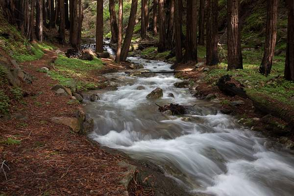 Limekiln State Park-13 222