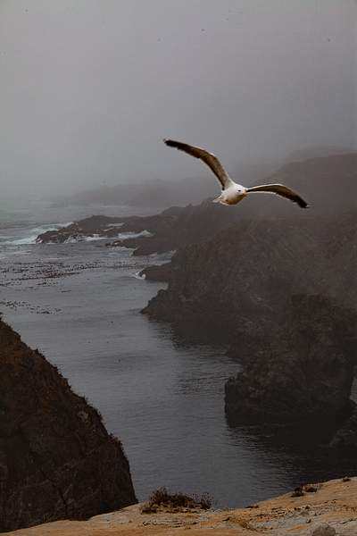 Fog With Seagull 222