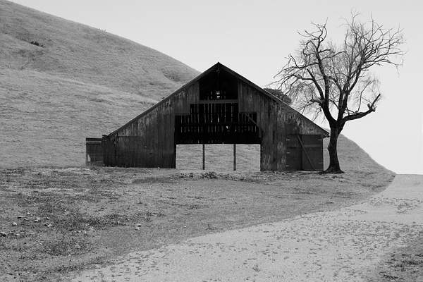Point Reyes Barn and Tree 222