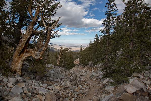 Great Basin NP-2 222