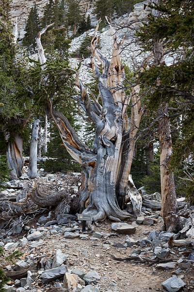 Great Basin NP-3 222