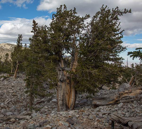 Great Basin NP-4 222