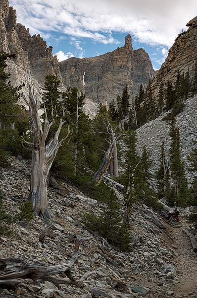 Great Basin NP-6 222