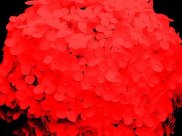 Rouge à effeuiller... by PaulMartin