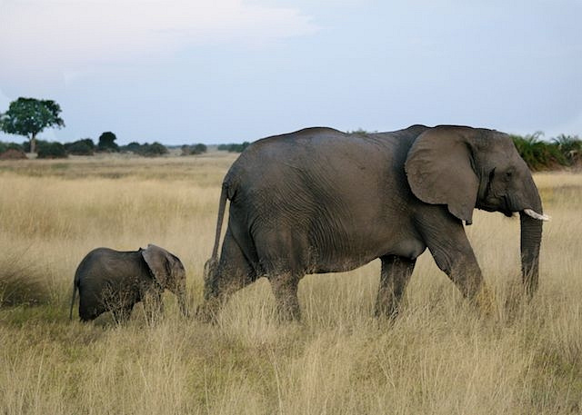 Mother Elephant with 3 month old