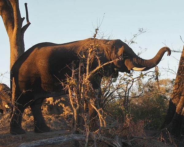 Elephant by AnneMetzger