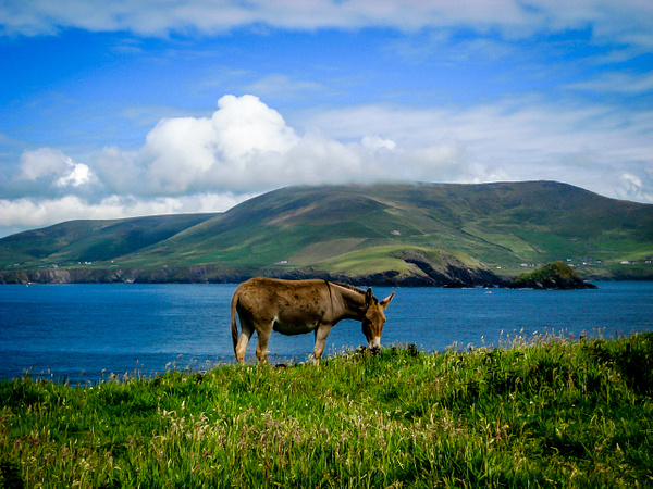 Ireland - Jun '11 by Jack Carroll