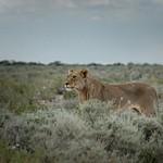 Etosha National Park [2] - Namibia - Mar '15
