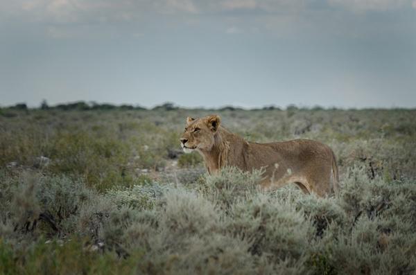 Etosha National Park [2] - Namibia - Mar '15 by Jack Carroll