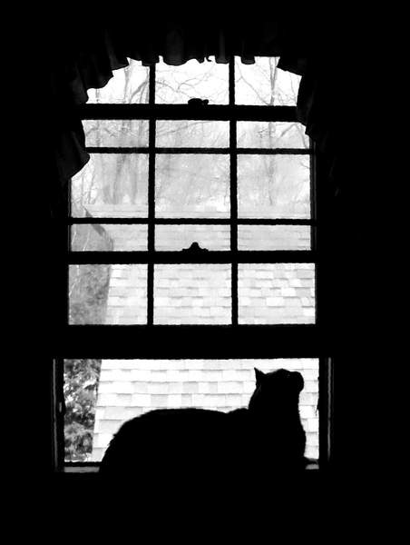 B&W Kitty in the Window