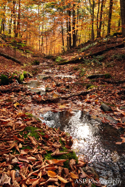 Fall 2013 by amysuephoto by amysuephoto