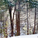 Along the Rail Trail, Winter 2016