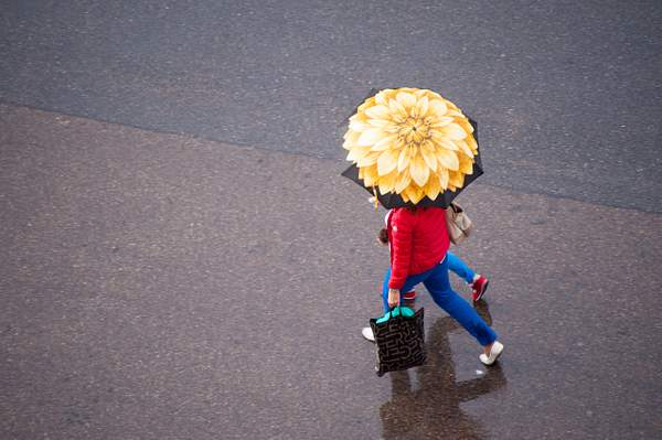 """""""Sun Flower in the Rain"""""""