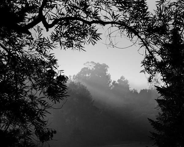 Fog in Tilden Regional Park, Berkeley, Calif.