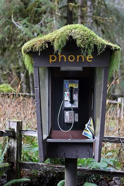 One of the Last Pay Phones, Ho Rainforest, Olympic National Park, Washington 222