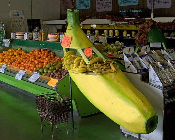 Giant Banana at the Giant Artichoke Fruit Stand in Castroville, California 222