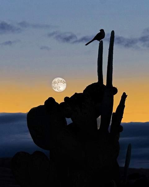 Moon Rise in San Miguel, CA, ©2010 Tom Debley 222