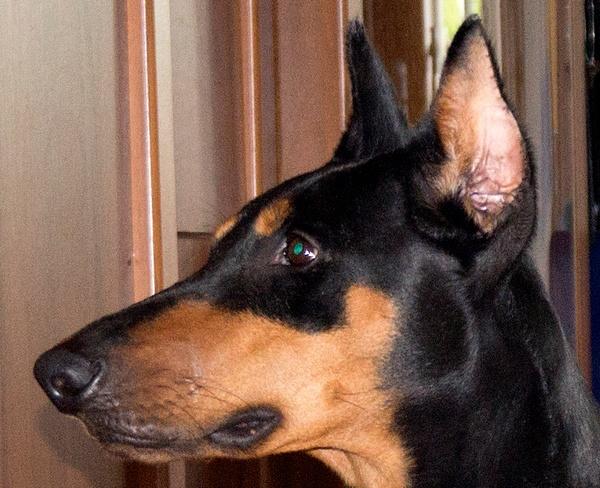 El perro by Lowdown