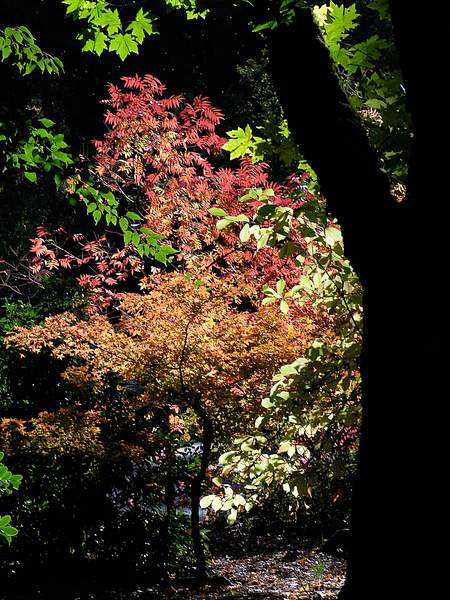 Oregon Colors 222
