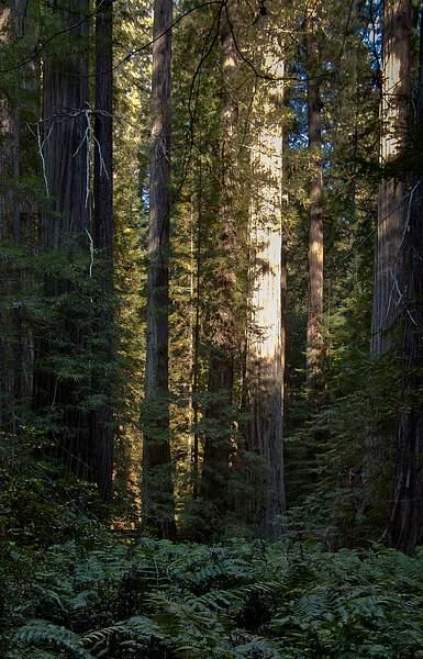 Forest Light 222