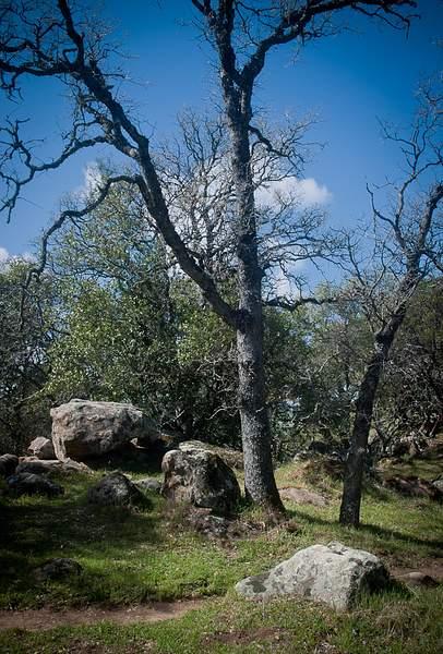 Bare Trees 222