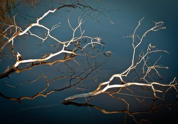 Dark Water 222