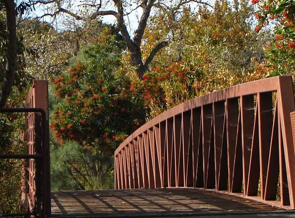 Bridge_into_the_wilderness_x 222