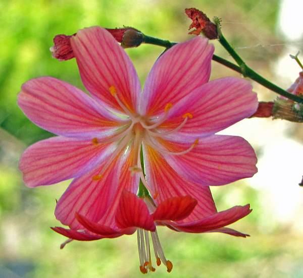 Flower_on_deck 222