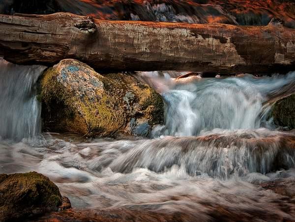 Stream in Zion