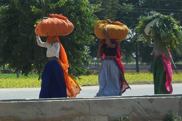 Women working, India 222