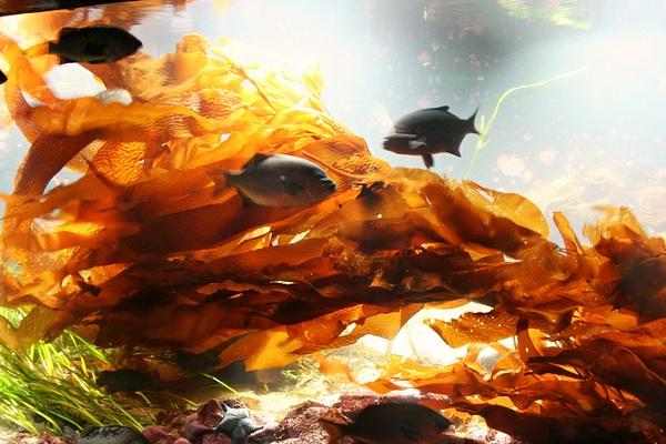 Vancouver 083 Aquarium by StefsPictures
