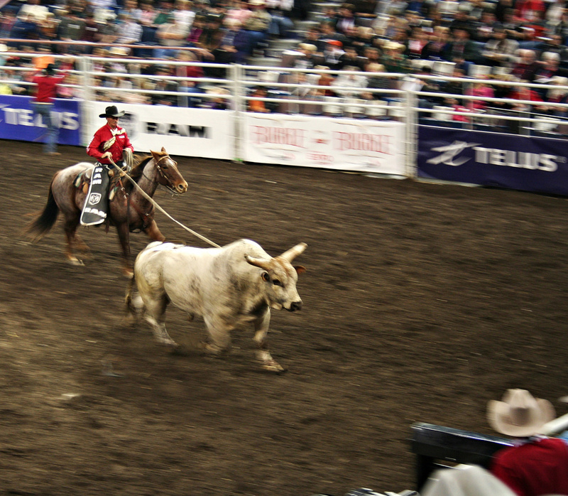 Rodeo 166