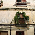 Havannna