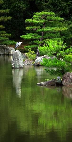 IMGP4830-Kyoto Kinkaku-ji