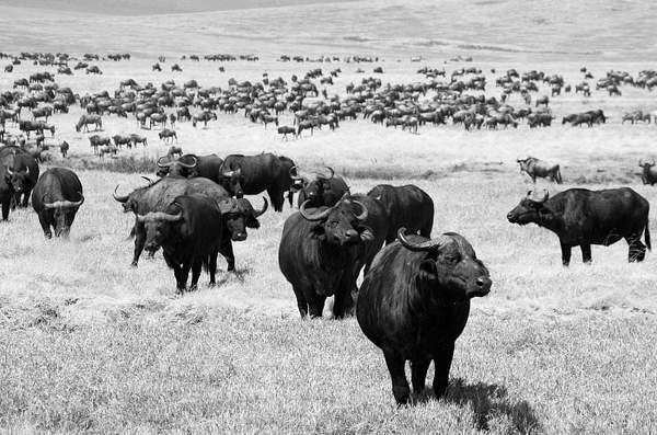 IMGP2429-Ngorongoro