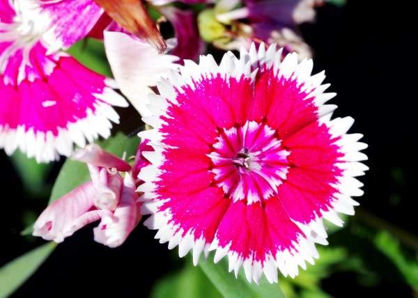 Flowers0023 222