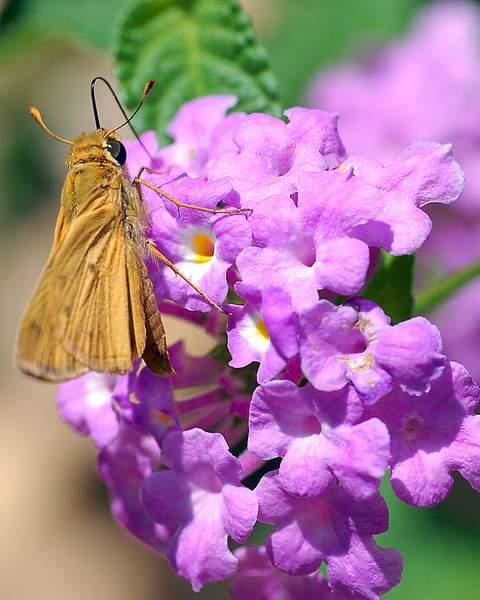 moth 222
