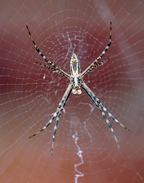 Spider 222