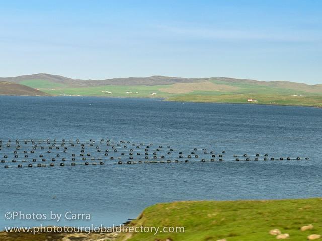 Shetland mussel farm