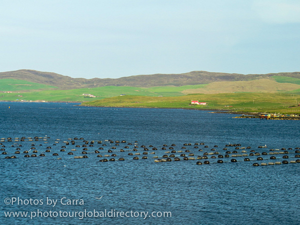 Shetland mussel farm 2 by Carra Riley