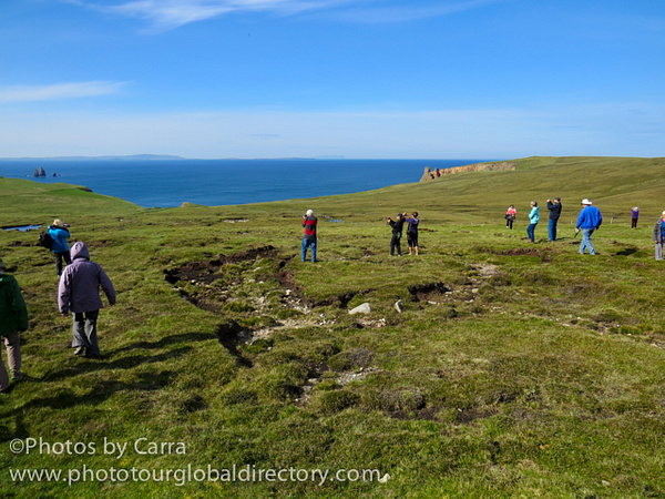 Shetland coast 7 lemmings 2 by Carra Riley