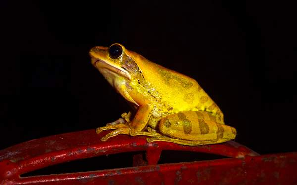 Frog-By-AlamgirHossain