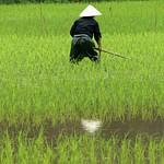 NINH BINH Vietnam 2014