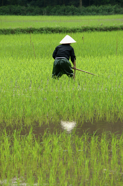NINH BINH Vietnam 2014 by Greg Vickers
